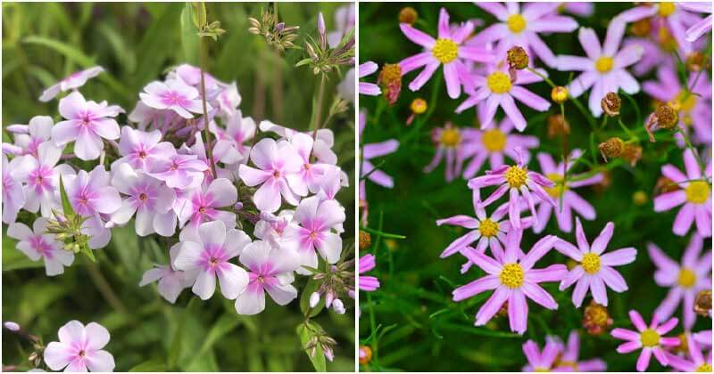 15 Amazing Pink Plants For Your Garden