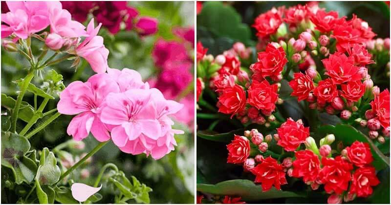 11 Easiest Blooming Houseplants