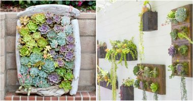 12 Stunning Succulent Wall Garden Ideas