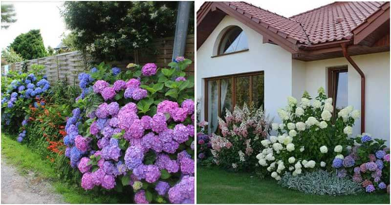 15 Landscaping Ideas with Hydrangeas