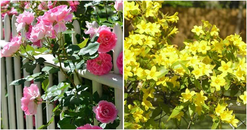 20 Best Beautiful Flowering Vines and Climbing Plants For Your Garden