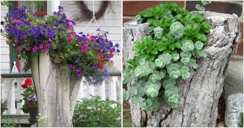 20 Gorgeous Tree Stump Planter Ideas