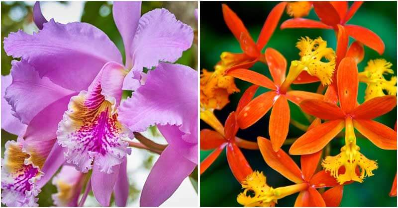22 Types of Orchids To Use As Houseplants