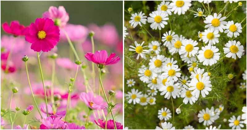 9 Flowers That Can Encourage For The Growth of Vegetables