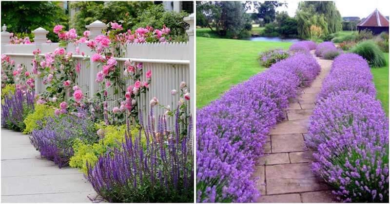 Garden Design Ideas with Lavender Flower