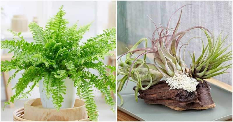 15 Indoor Plants That Can Reduce Humidity in Your Bathroom