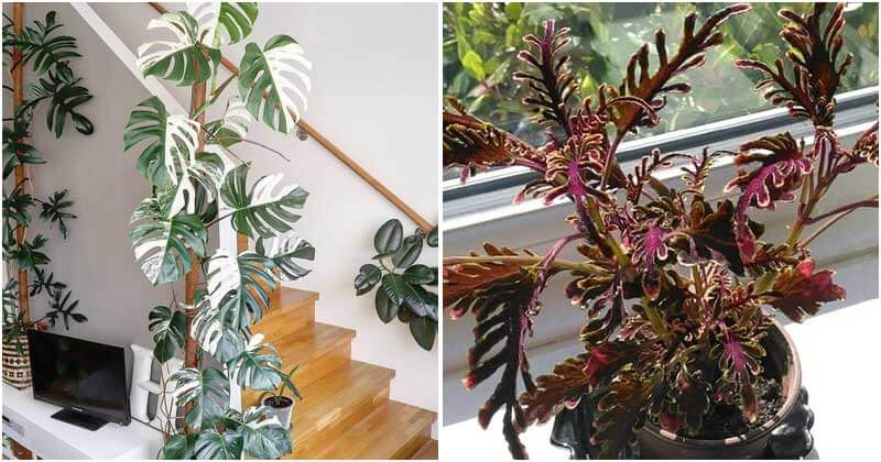16 Plants with Unique Cut Foliage To Place Indoors