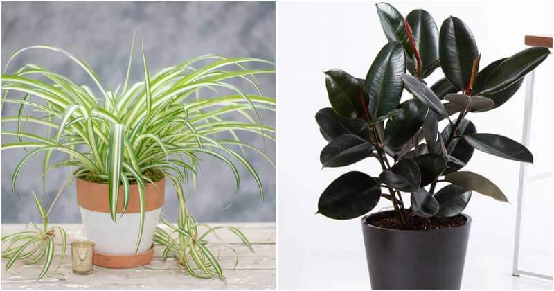 10 Indoor Plants That Can Help You Reduce Respiratory Problems