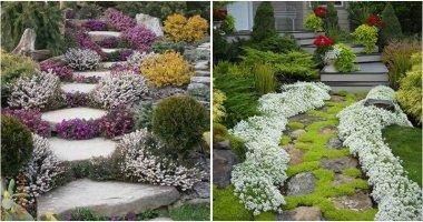 19 Flowering Ground Covers For Garden