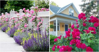 15 Stunning Rose Garden Ideas
