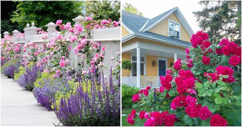 15 Stunning Rose Garden Ideas