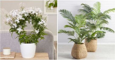 20 Good Luck Plants To Place Indoor
