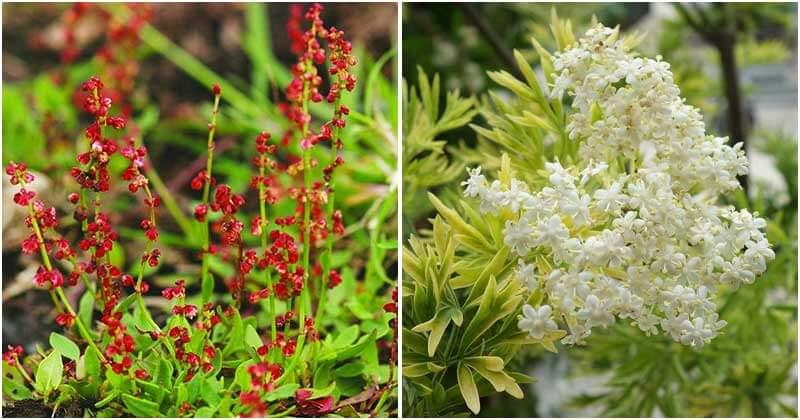 17 Edible Weeds With Extraordinary Health Benefits In Your Garden