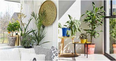 20 Best Beautiful Indoor Plant Corner Ideas