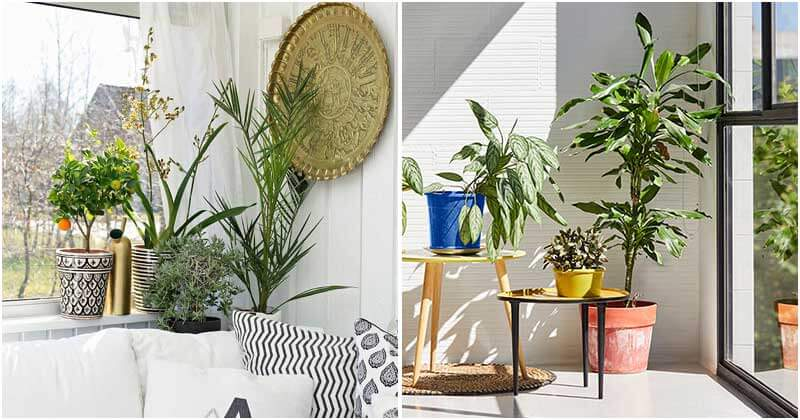 20 Best Beautiful Indoor Plant Corner Ideas