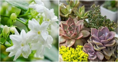 15 Plants Help You Reduce Stress, Anxiety, And Depression