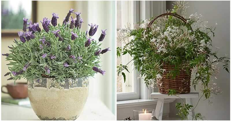 21 Vastu Plants for Home Which Brings In Health, Harmony, and Wealth