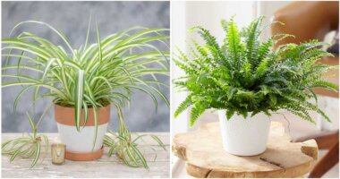 11 Air Purifying Indoor Plants Safe For Your Cats