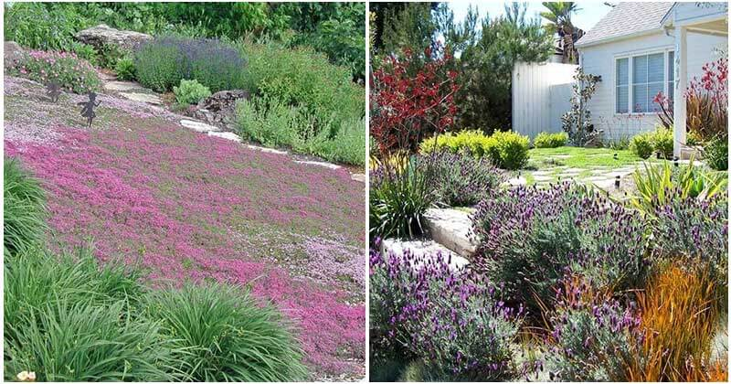 Landscaping Grass Ideas For Your Front Yard
