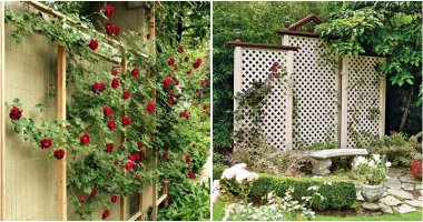 20 Beautiful Trellis Fence Ideas