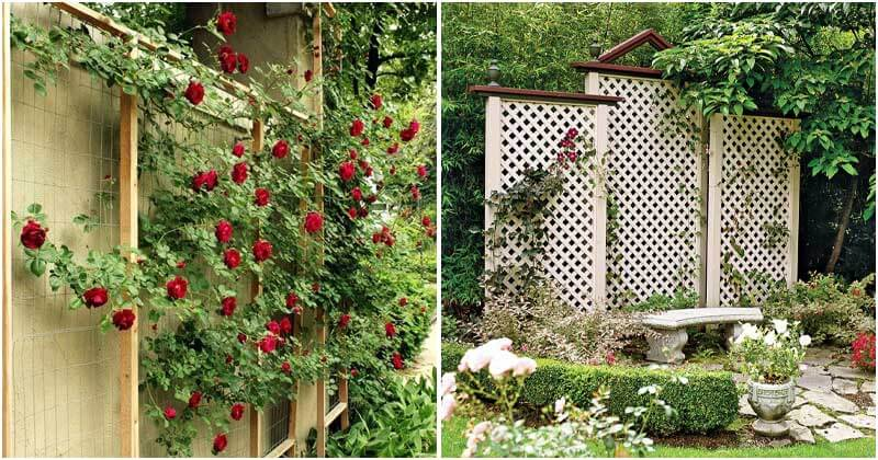 20 Beautiful Trellis Fence Ideas