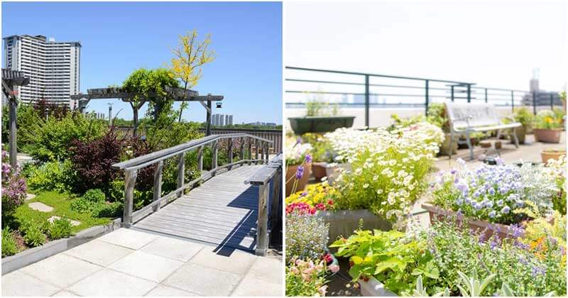 19 Beautiful Rooftop Garden Ideas For Those Who Love Nature