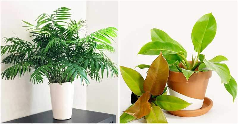 16 Indoor Plants That Can Boost Your Productivity