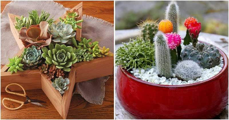 20 Best Beautiful Plants To Dress Up Your Living Space