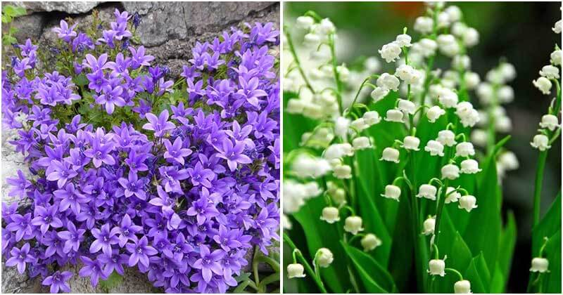 18 Best Beautiful Flowering Ground Cover Plants