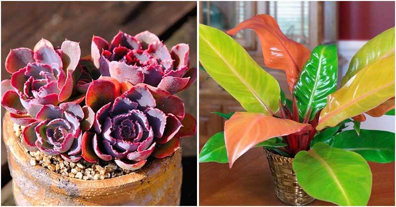19 Beautiful Neon Houseplants To Place In Your Home