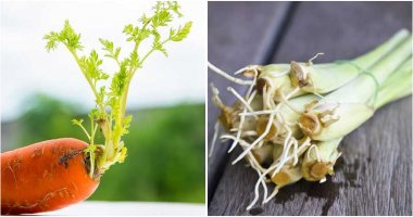 30 Vegetables, Herbs, Fruits That You Regrow From Kitchen Scraps Any Time