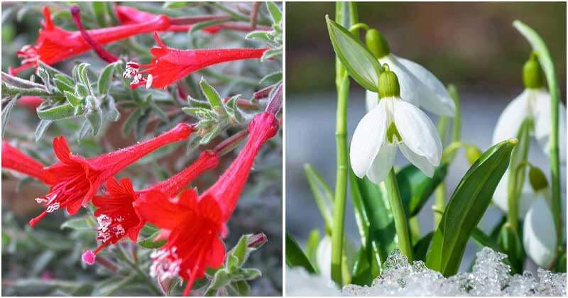 17 Appealing Bell-Shaped Flowers To Grow In Your Garden