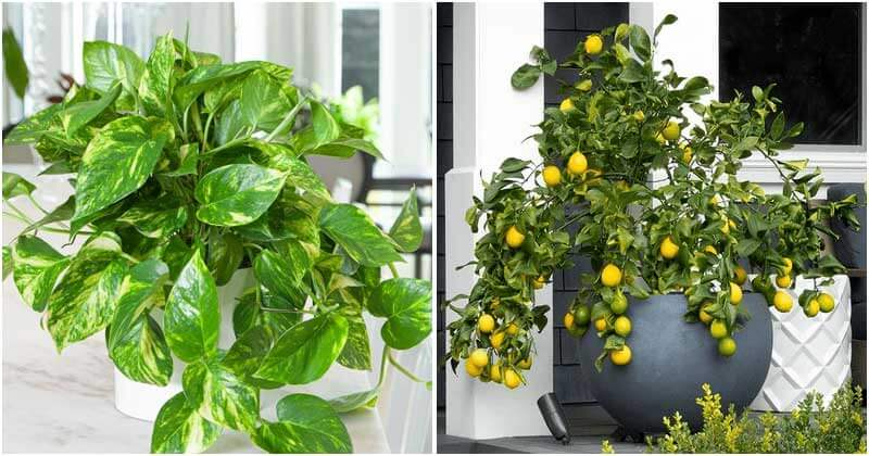15 Beautiful Tropical Plants To Grow In Your Home