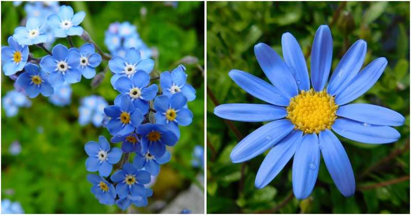 30 The Most Beautiful Blue Flower Types