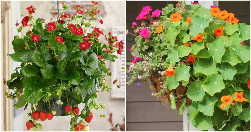 30 Edible Plants That Can Easily Grow In Hanging Basket