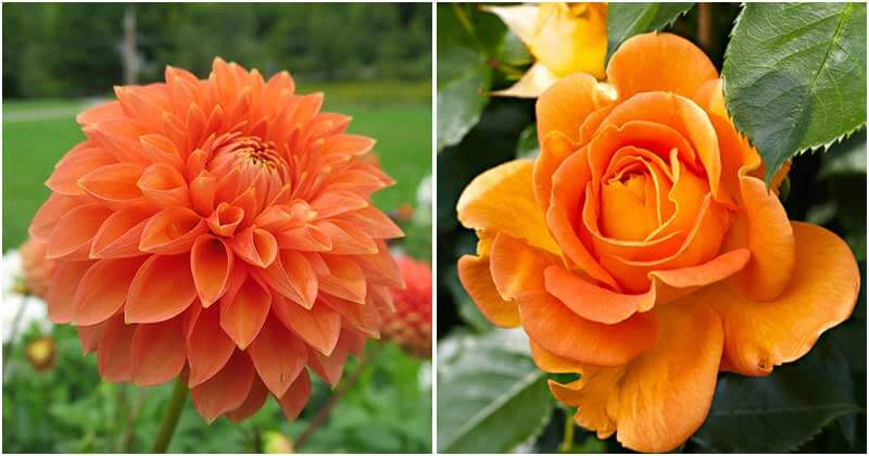 30 Eye-Catching Orange Flowers To Add Charming To Your Garden
