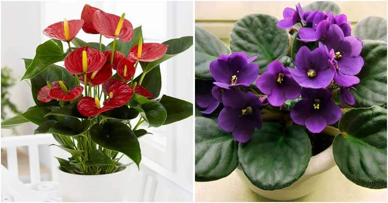 Flowering Houseplants To Add Color And Fragrance To Your Home