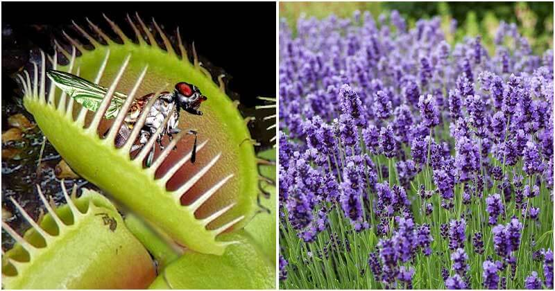 Incredible Plants That Can Get Rid Of Repel Flies