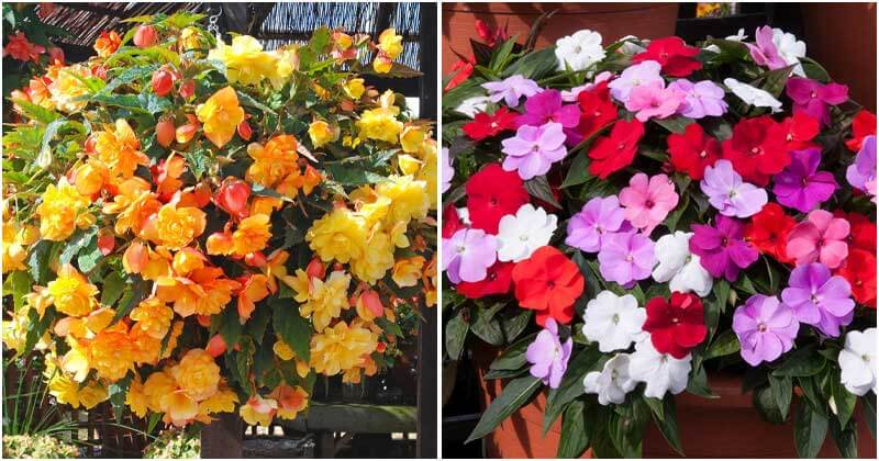 The Most Beautiful Flowers To Grow In Your Balcony