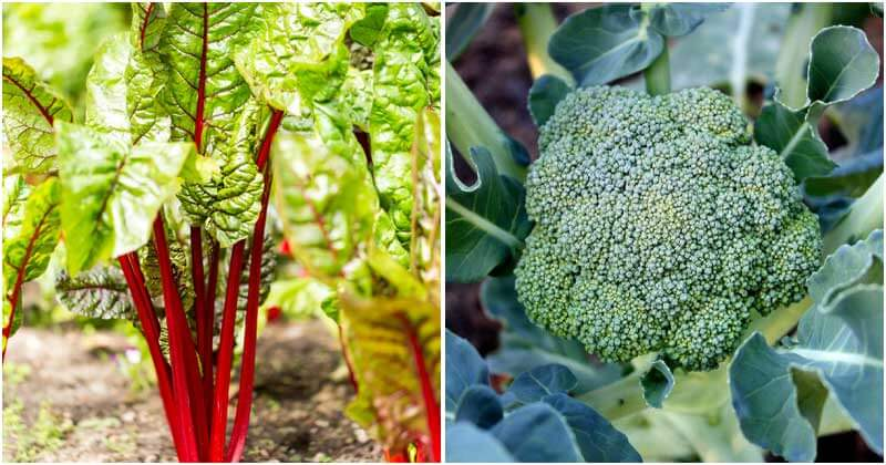 15 Vegetable Plants That Can Frost Tolerance When Winter Comes