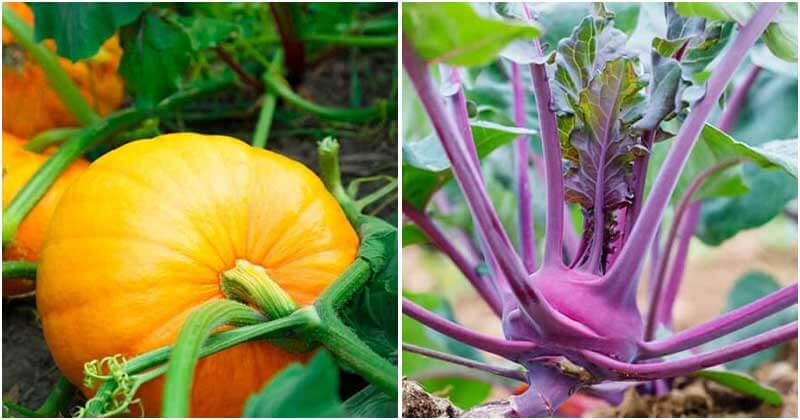 30 Vegetables Highest in Calcium To Grow At Home