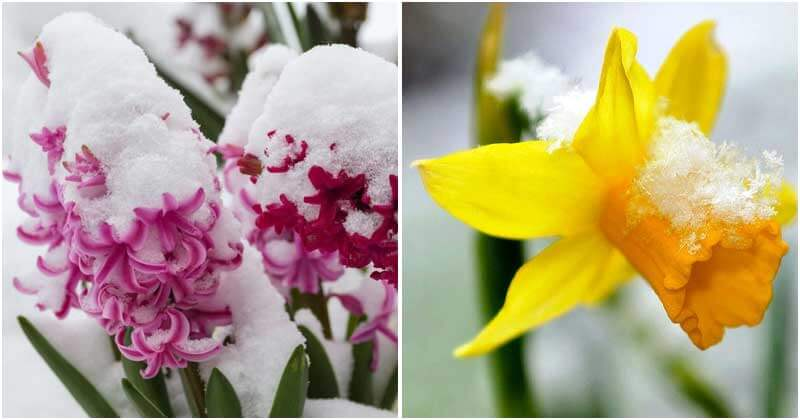 14 Frost Tolerant Flowers Of The Cold Weather