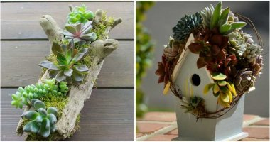 26 Creative DIY Succulent Garden Ideas