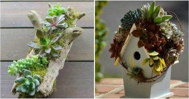 26 Creative DIY Succulent Garden Ideas