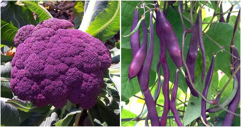 22 Beautiful Purple Vegetables And Fruits To Grow In Your Garden