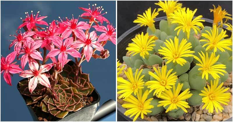 19 Unique Flowering Succulents To Decor Your Home