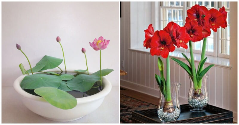 Water Flowers Grow in Vases and Containers To Place Indoor