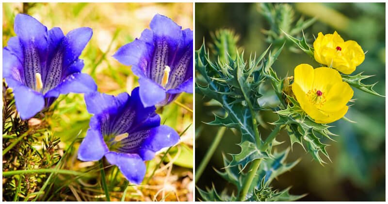 The Best Beautiful Cup Shaped Flowers To Grow In The Garden