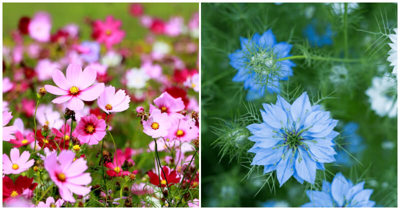 Fast Blooming Flowers Grow From Seeds