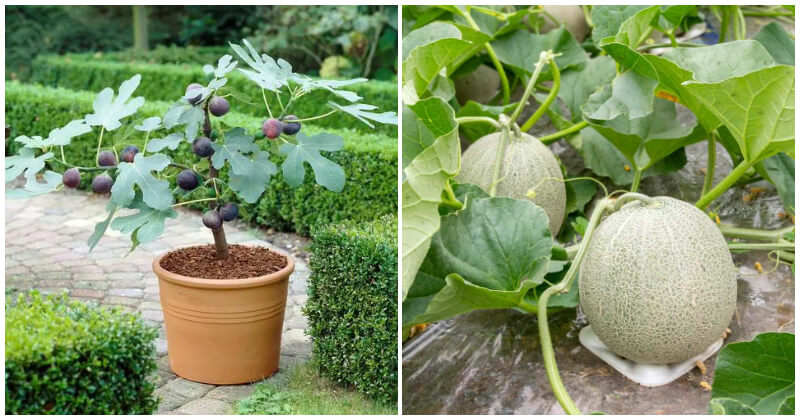 Plants That Bear Fruit Fast To Grow In Your Garden
